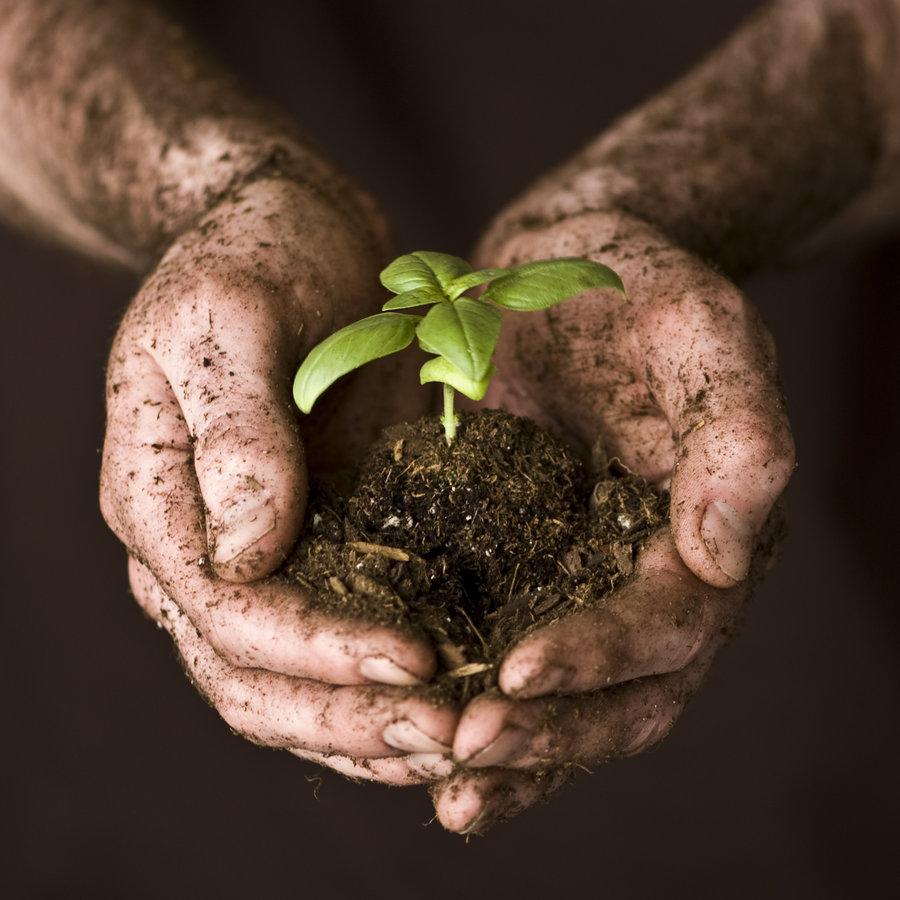 Image result for jesus hands in dirt